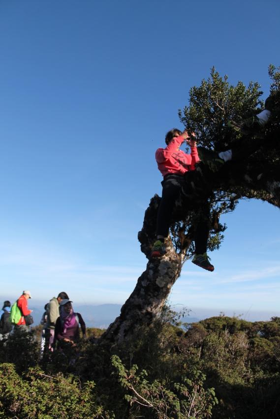 Lukas on a Tree